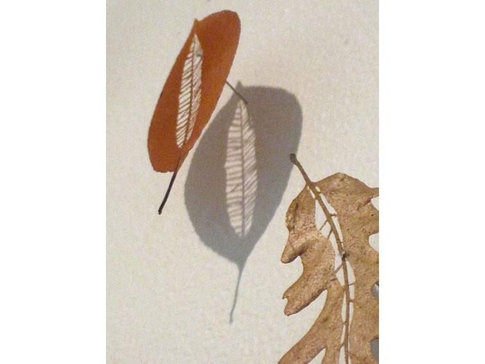 cut-leaf-close-up-with-shadows-1