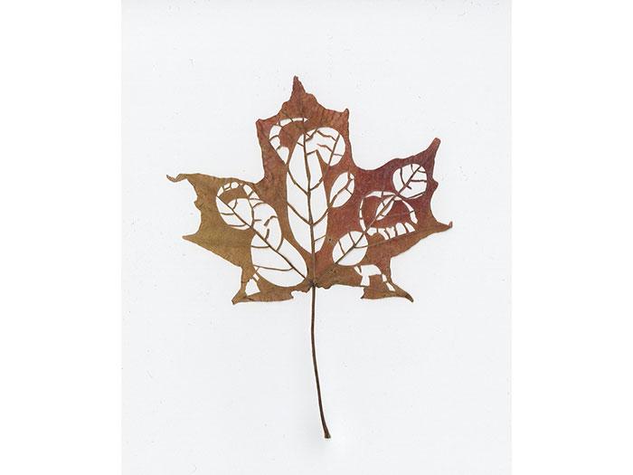 leaf-family-1