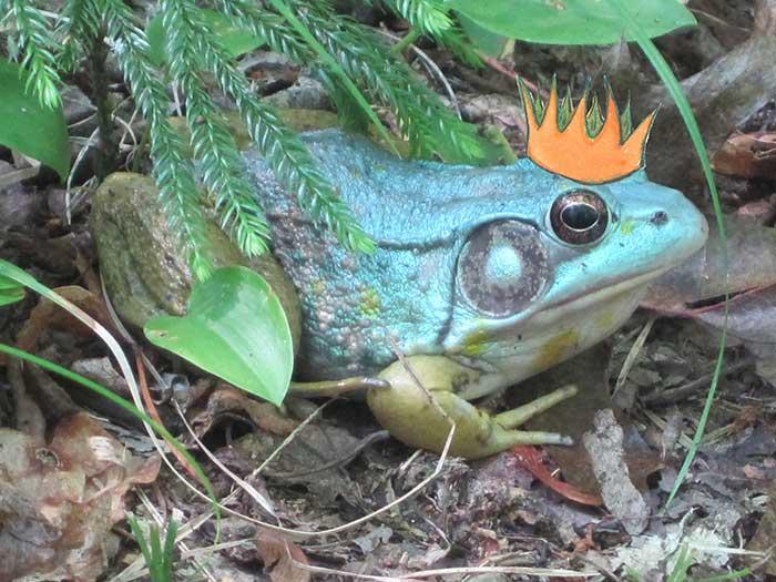 frog-king-1-1