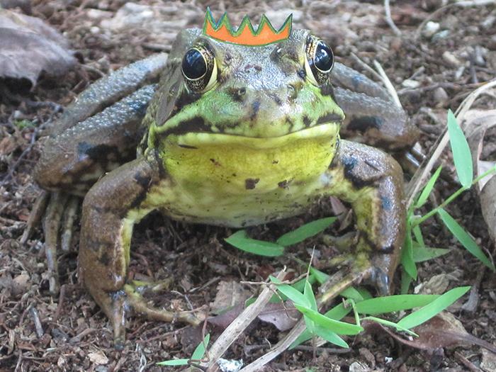 frog-king-2-1