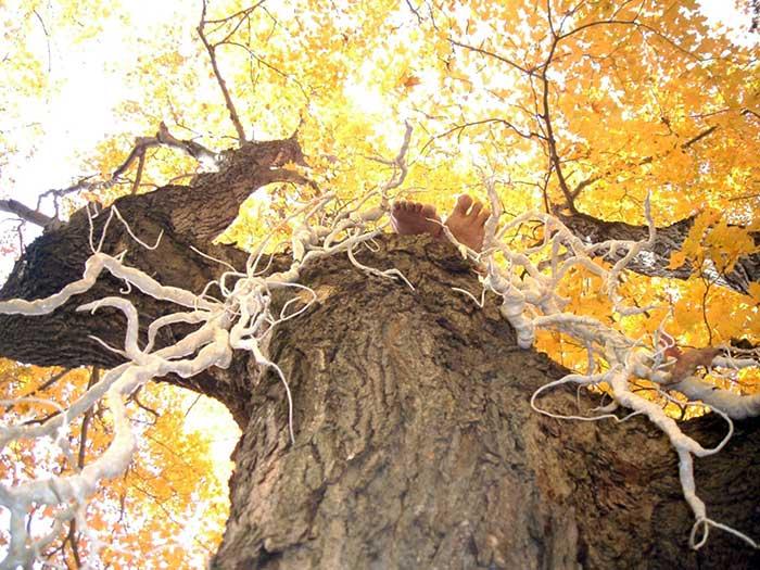 tangled-tale-autumn-1