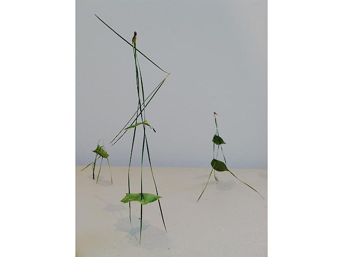2.Pine-Needle-Circus-23